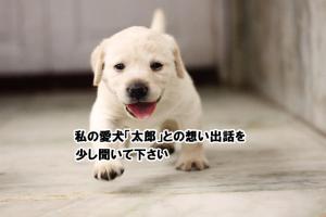 私の愛犬「太郎」との想い出話を少し聞いて下さい